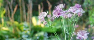 Gartenpflege & Gartenplanung