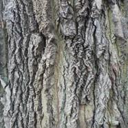 Baumgutachten/-kontrollen