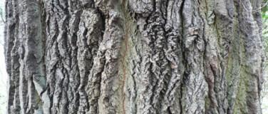Baumgutachten & -kontrollen