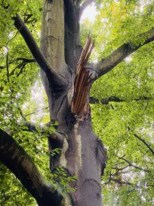 Baumkontrolle in Potsdam - Foto von KeilerGrün