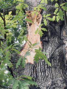 Baumkontrollen in Potsdam - Foto von KeilerGrün