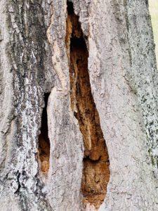Baumkontrolleur in Potsdam - Foto von KeilerGrün